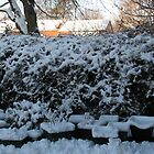 Garden Under Snow by MidnightMelody