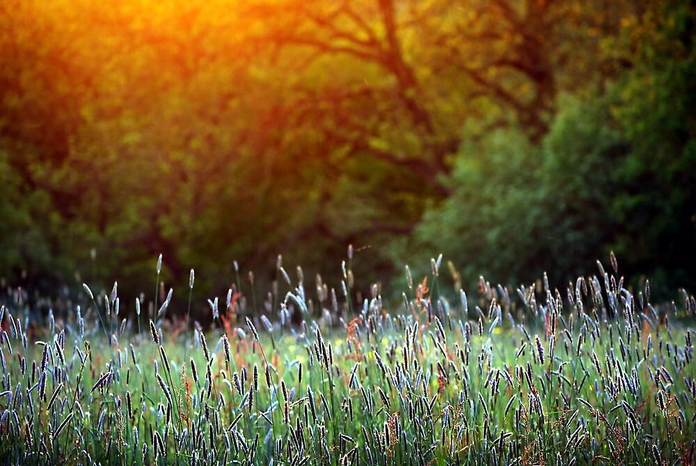 mellow meadow by Andrew  Kearton