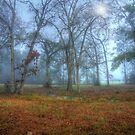 Foggy Day by seagrl44