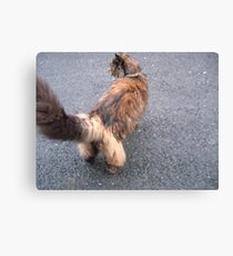 Cats Trousers Canvas Print