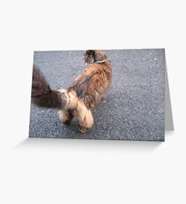 Cats Trousers Greeting Card