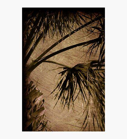 Vintage Palm Photographic Print