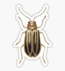 Neobrotica vittatipennis Sticker