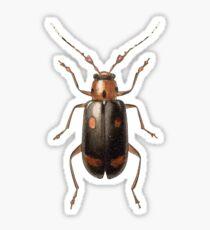 Malacorhinus dilaticornis Sticker