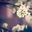 White Floret by Katayoonphotos