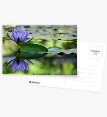 Purple Water Lily Postcards