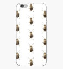 Neobrotica vittatipennis iPhone Case