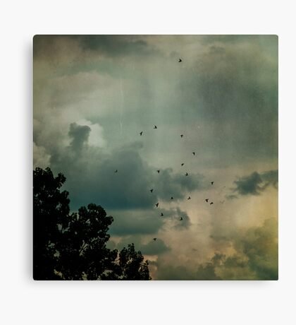 Flying Higher Canvas Print