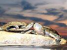 Turtle Love by Veronica Schultz