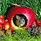 Christmas mouse inside a apple  by Simon-dell