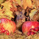 wild Autumn house mouse  by Simon-dell