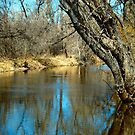 St Vrain River - Lyons, Colorado by Barb Miller