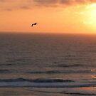 Seagull Sunset by BernieG