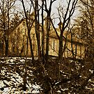 Old Barn Thru the Trees by ericseyes