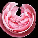 Pink Petals by Kym Howard