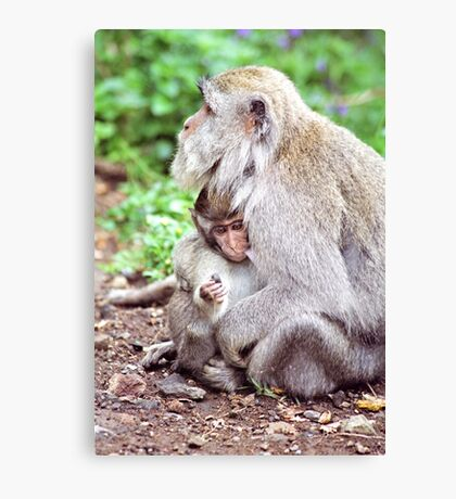 Macaque Mother and Baby Canvas Print