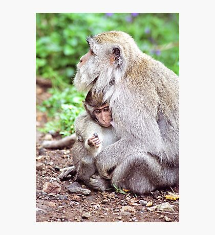Macaque Mother and Baby Photographic Print