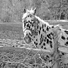 My name is spotty by marchello