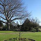Hamilton Gardens, New Zealand by Jade Thorby