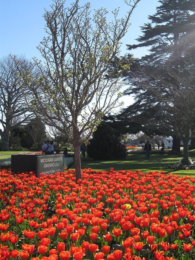 Dutch Tulip Fesival, Hamilton Gardens, New Zealand by Jade Thorby