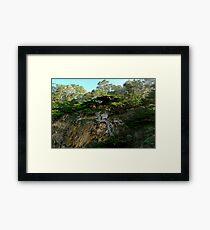 Old Veteran - Point Lobos State Reserve Framed Print