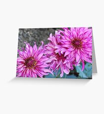 Gorgeous Dahlia's Greeting Card