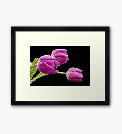 Flowers in The Rain Framed Print