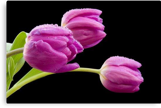 Flowers in The Rain by Ray Clarke
