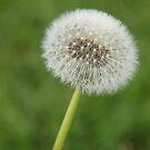 Make A Wish by Emma Holmes