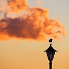Bird On A Lamp by Emma Holmes