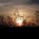 Sunset from a ditch by marchello