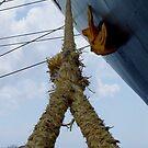Mooring Rope by Jennifer Chan