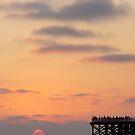 San Diego Sunset by Jennifer Chan