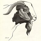Boer Buck Headstudy 2 by Patricia Howitt