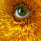 AN EYEFUL OF SUNSHINE by June Ferrol