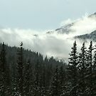 Colorado Winter by Jennifer Chan