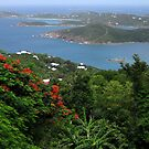 View from Paradise Point by Jennifer Chan
