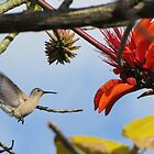 The Landing by hummingbirds