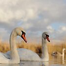 Three Swans by Richard Heeks