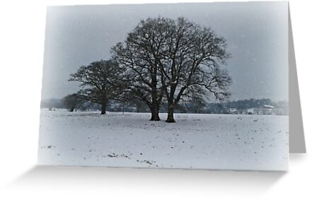 Winter Trees by ColinBoylett