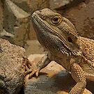 Lizard by Jennifer Chan