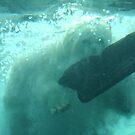 Polar Bear Plunge by Jennifer Chan