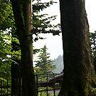 Evergreen by Jennifer Chan