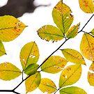 Autumn in Huntley Meadows, Virginia by MyFrogCroaked