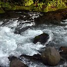 Daiya River, Downstream by Jennifer Chan