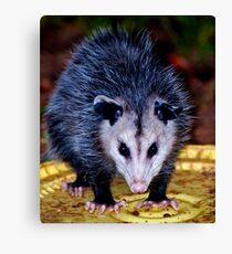 Backyard Opossum Canvas Print