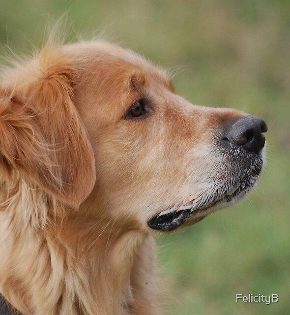 Golden Profile by FelicityB