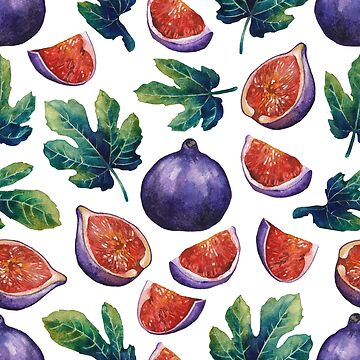 Watercolor fig fruits and leave by Glazkova