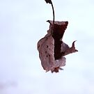 Withered Leaf of Winter by Zach933