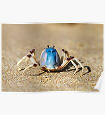 Soldier crabs (Mictyris longicarpus?) With Angry Face! Poster